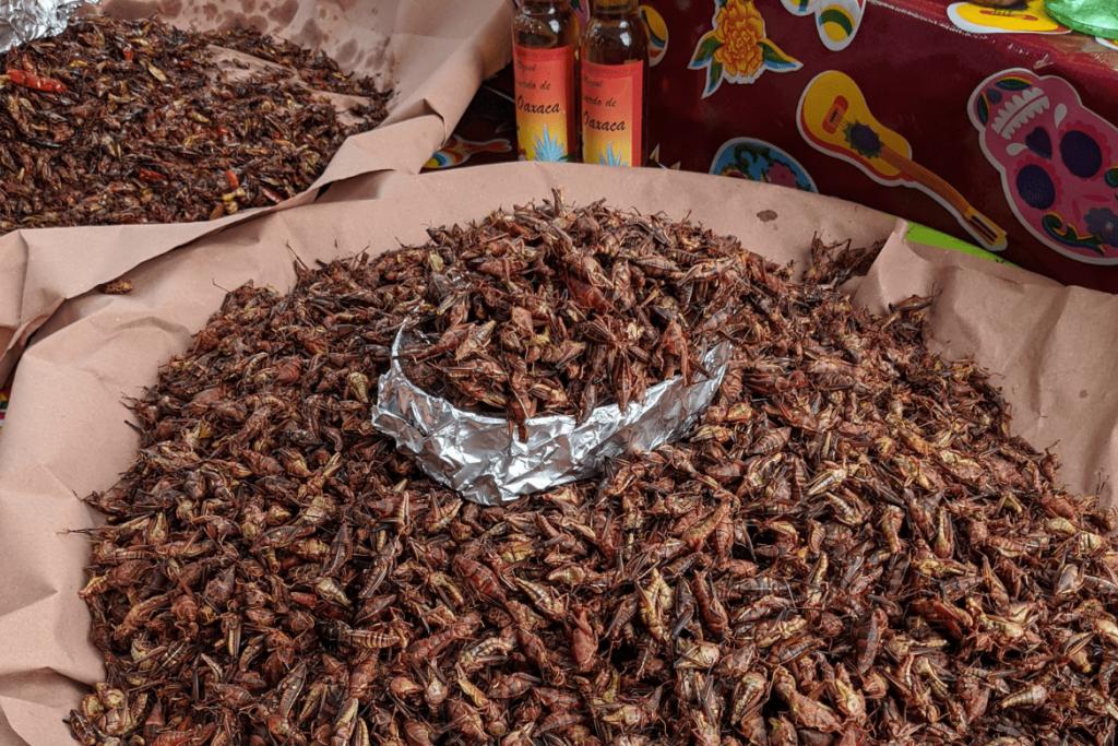 Oaxacan Food | Traditional Oaxaca Food | Chapulins | Crickets
